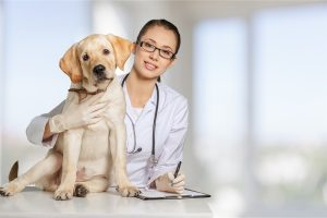 pet-medical-insurance-dog-with-vet